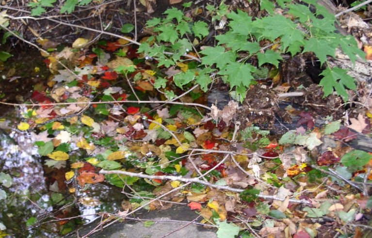 Autumn leaves beautify a creek